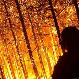 Внимание! Возможны задержки доставки из-за лесных пожаров>